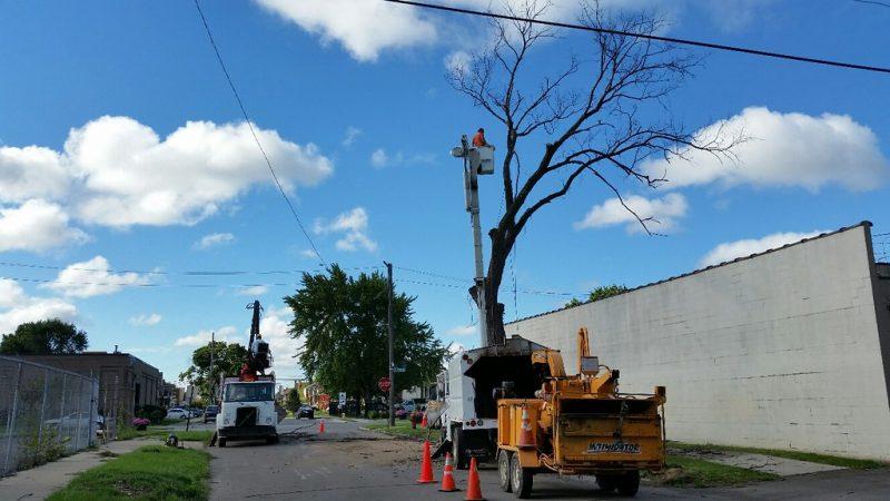 tree removal arlington