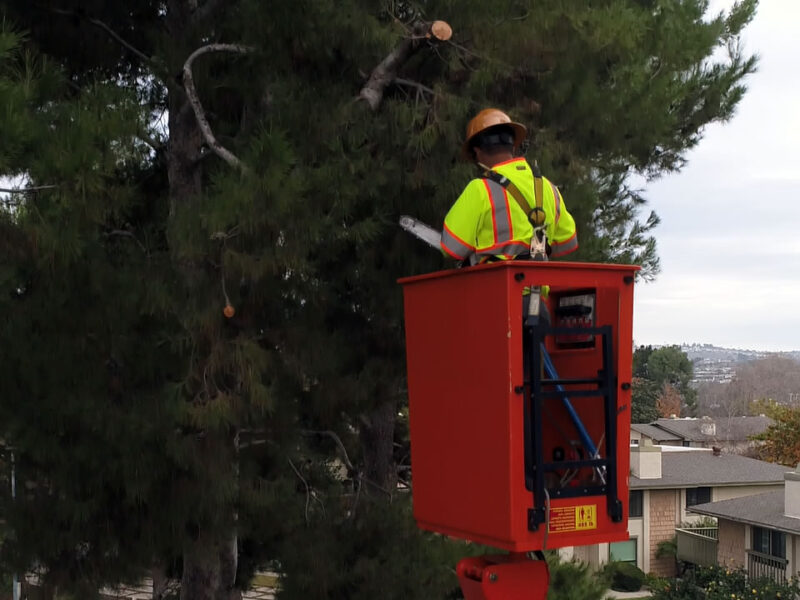 san diego tree removal